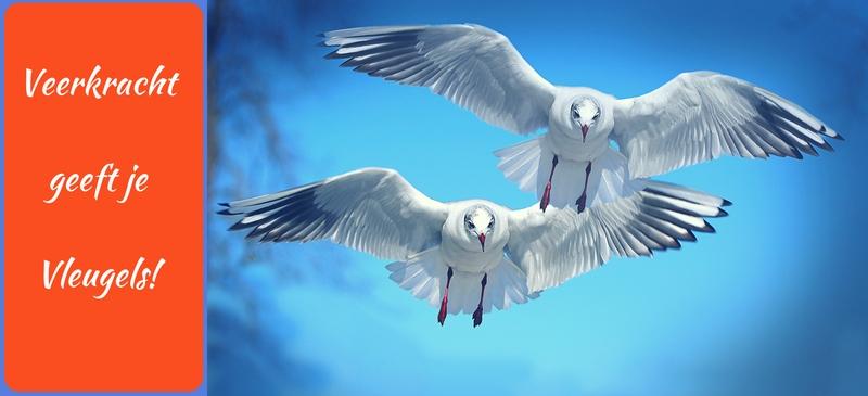 veerkracht geeft je vleugels